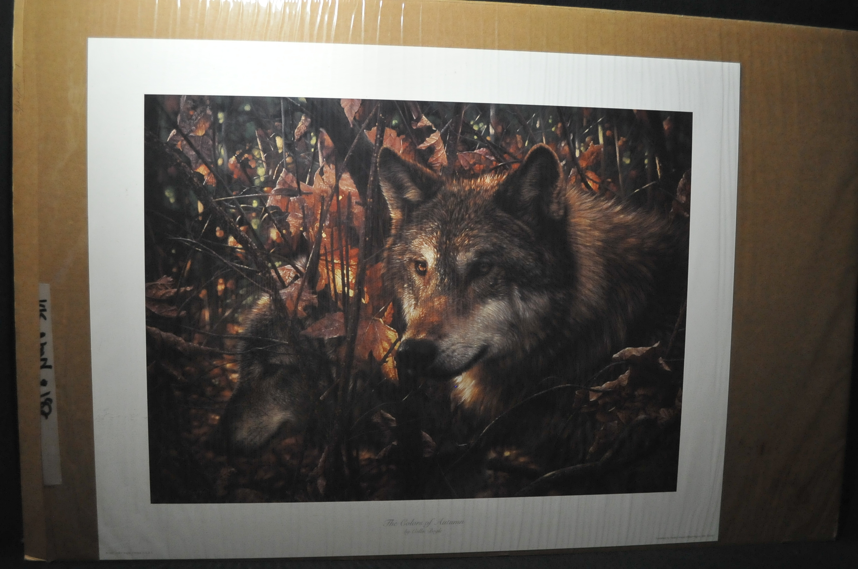 wolf art print sale colors Autumn wildlife wall decoration hunting cabin